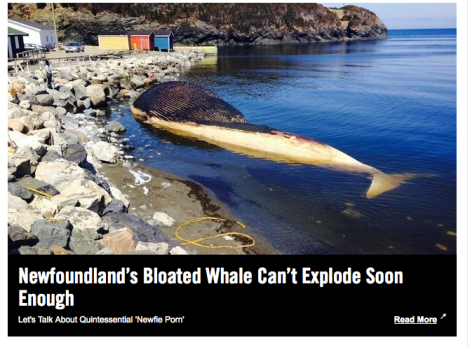 Newfoundland's Exploding Whale Can't Explode Soon Enough | VICE Canada